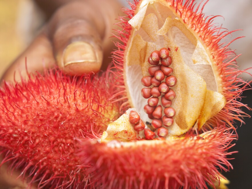 Annatto is a natural colorant derived from the seeds of the fruit of the achiote tree. It will soon be used to color Butterfingers.
