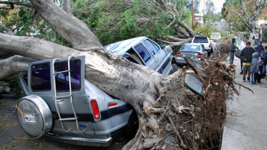 Toppled trees in the Highland Park section of Los Angeles did some heavy damage to vehicles parked along a street.