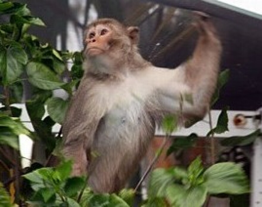 mystery monkey.jpg