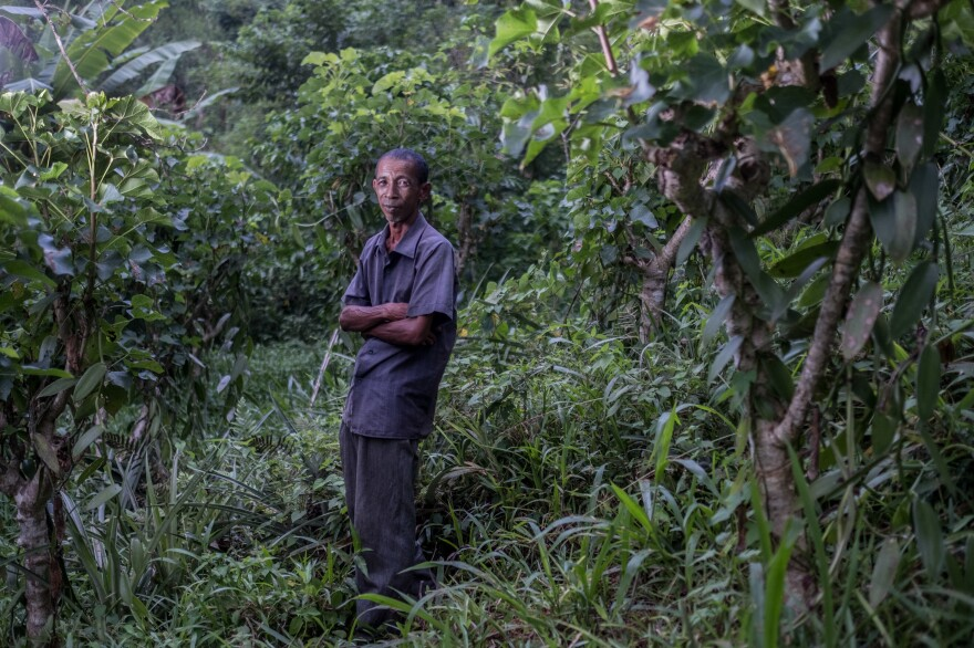 Zaratombo, a vanilla farmer and member of a local collective that sells to Virginia Dare, photographed in his field outside the village of Belambo, Madagascar.