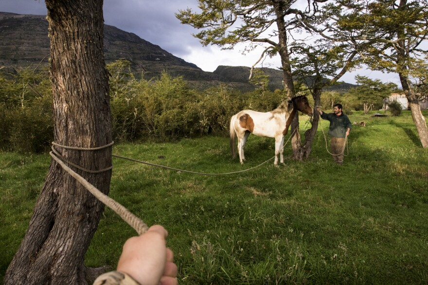 Ranching forces one to live in the present moment while attending to the needs of cattle, horses and working dogs. The photographer grips a lasso while her partner halters a young mare that has colicked and needs immediate care.