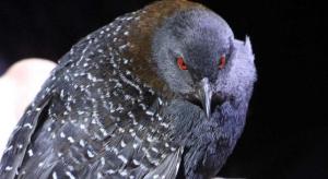 Elusive Wetland Bird Added To Florida's Endangered Species List