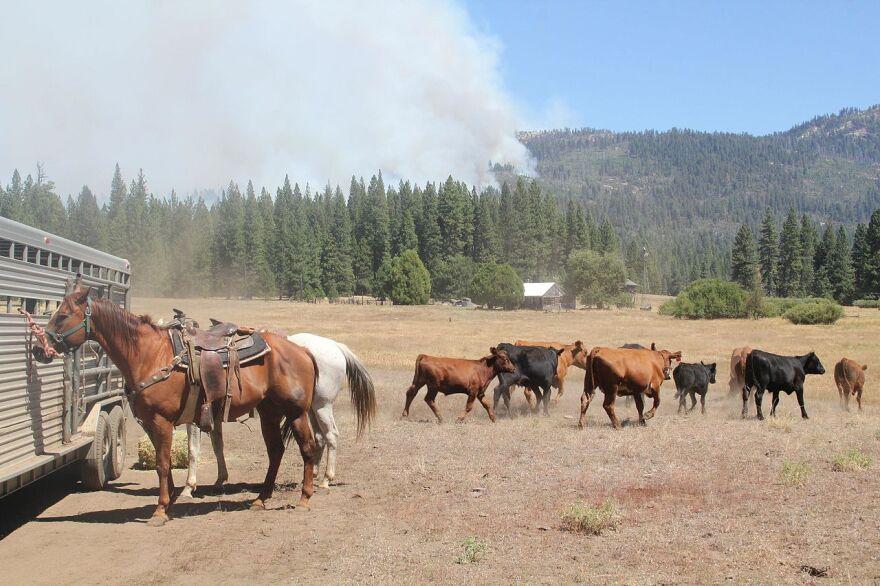 rim_fire_livestock_scatter.jpg