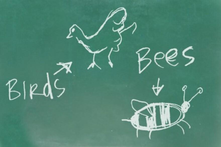 birdsbees.jpg