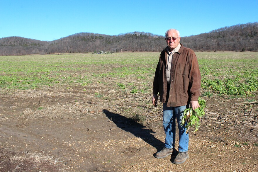 Ed Heisel grows corn and soybeans in Franklin County. This past season's corn field has been planted with daikon radishes as a cover crop for the winter.