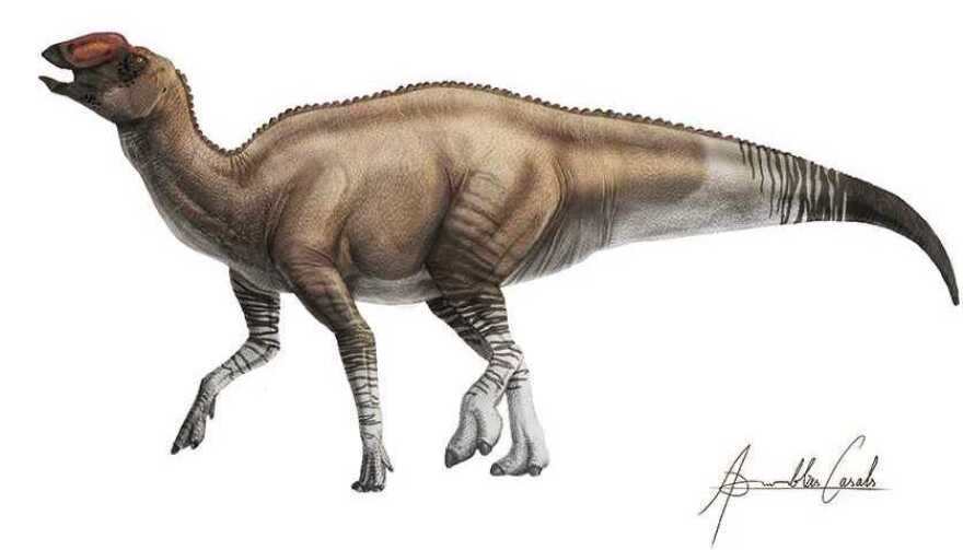The new species, Aquilarhinus palimentus, lived in the Big Bend region about 80 million years ago.