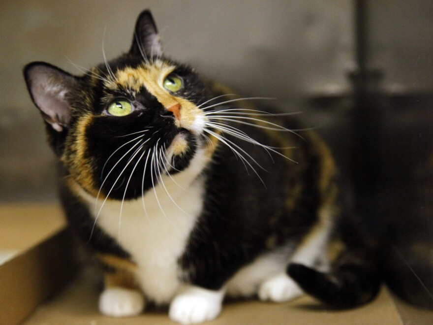 Willow, who somehow got from Colorado to Manhattan, at her temporary home in a New York animal care facility on Wednesday (Sept. 14, 2011).