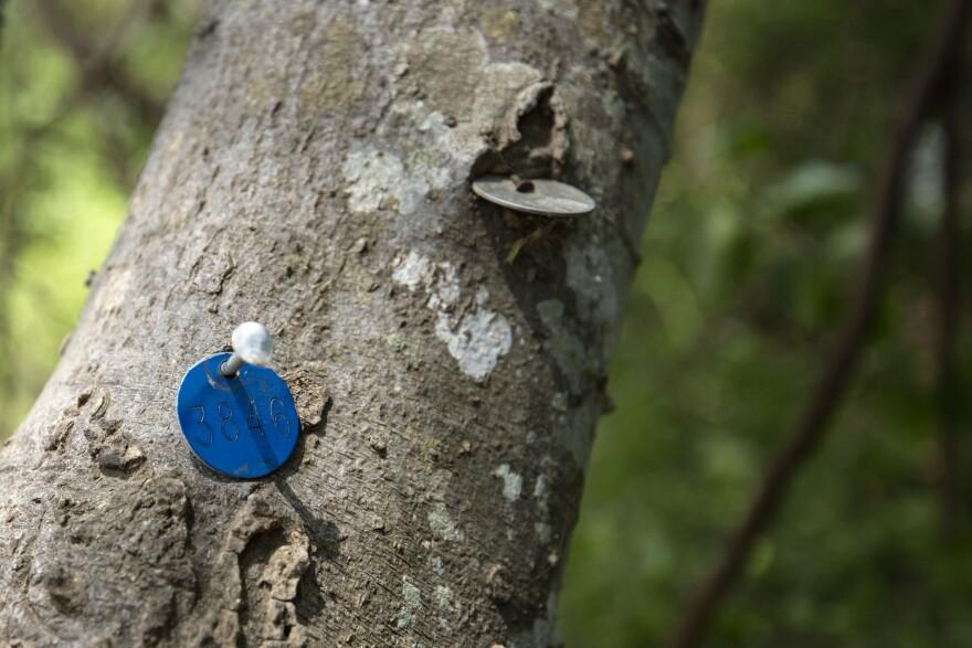 tree_tags.jpg