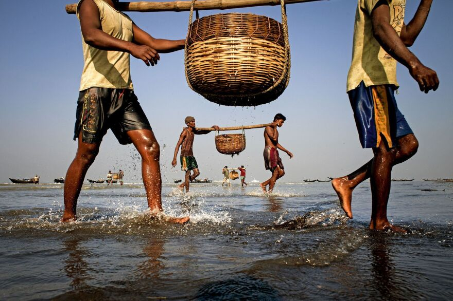 Fishermen in the Sunderban area of Bangladesh return to their boats after collecting fish in baskets.