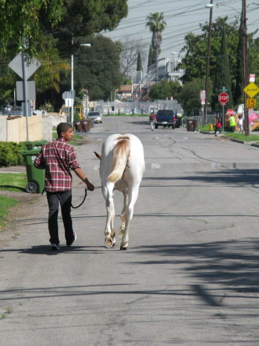 A young man leads his horse down the streets of Richland Farms.