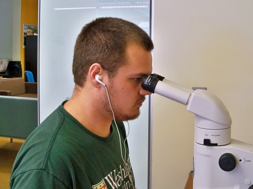 Thomas Van Horn identifies ticks at the microscope. Van Horn was a Tyson Undergraduate Research Fellow at Tyson Research Center when he conducted this research.