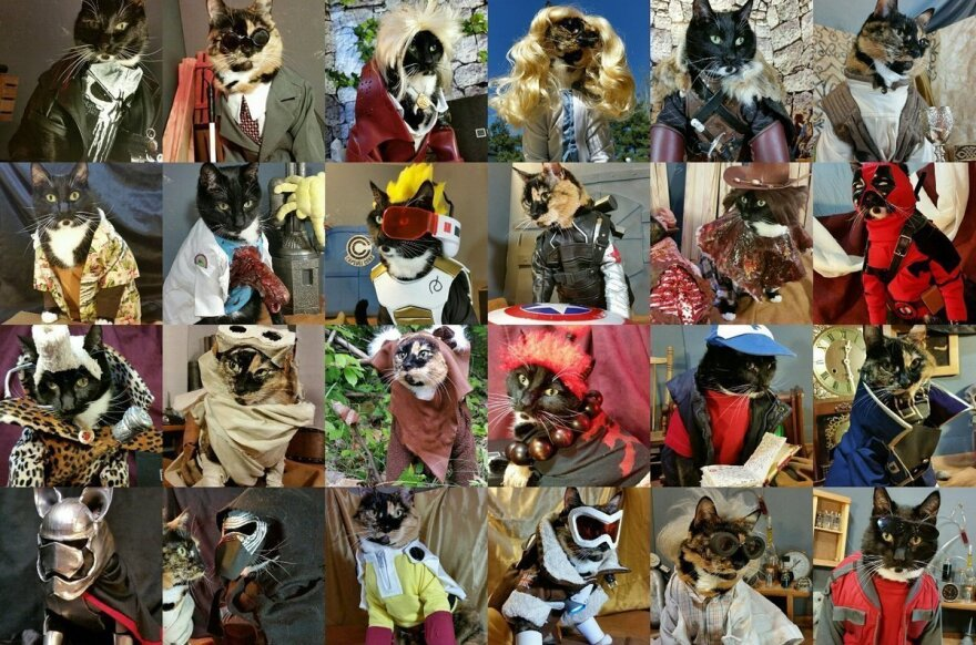 """Some of the 50 costumes <a href=""""http://cat-cosplay.tumblr.com/"""">cat-cosplay.tumblr.com</a> has released. Their creator, a Seattleite who goes by Freyu, began costuming his cats six years ago, for a Renaissance fair."""