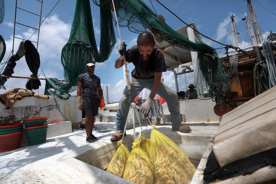 Jessie Romero pulls shrimp from the freezer of a boat docked at the Erickson and Jenson Seafood packaging facility in Aransas Pass, Texas.