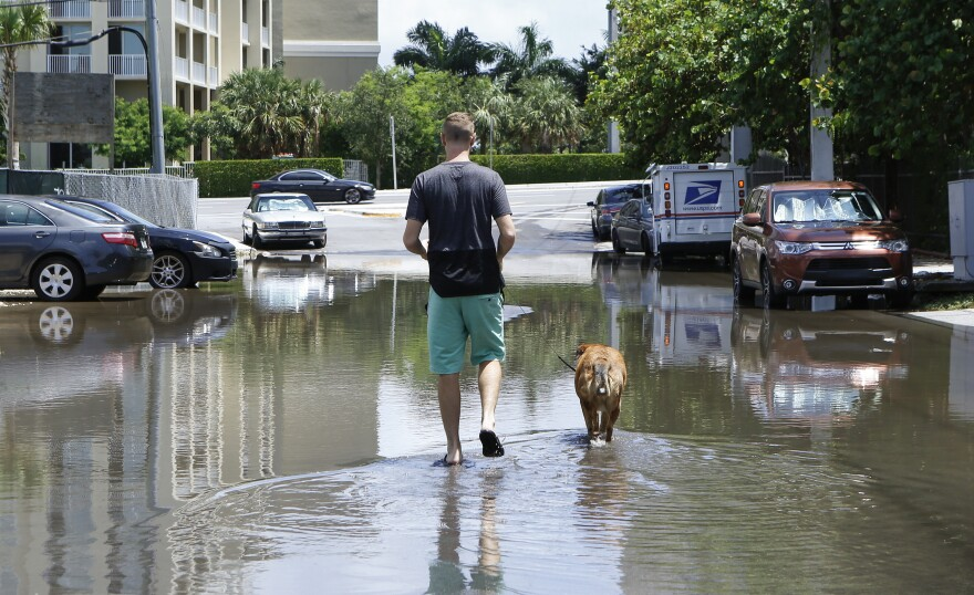 In this June 19, 2019 photo, 27-year-old Ben Honeycutt is shown walking his dog through a flooded Miami street cause by heavy rain. Some consider Miami the Ground Zero for any climate-related sea level rise in the U.S.