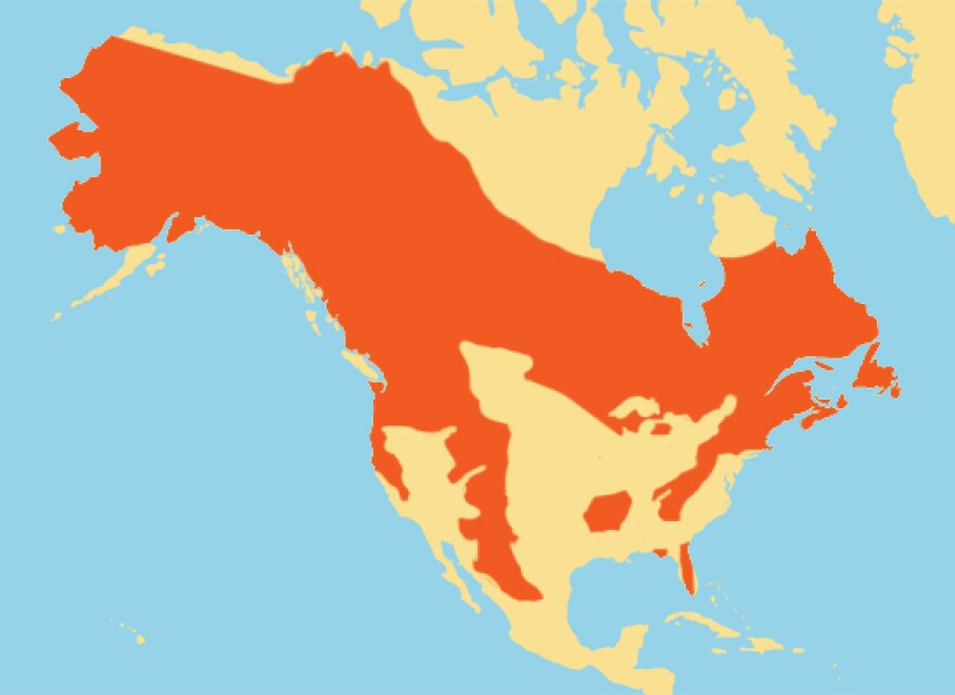 black-bear-range-map.jpg