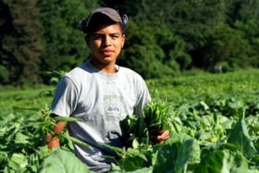 farmworker_mhpsalud.org_.jpg