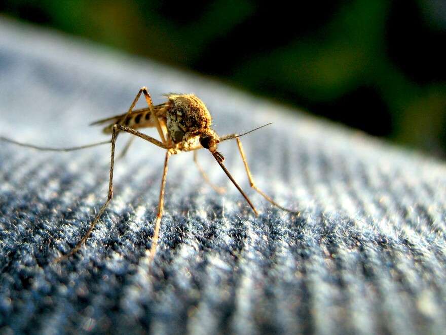 2000 people have died from West Nile Virus in America since 1999.