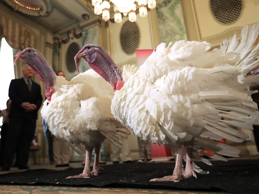"""Drumstick and Wishbone, the National Thanksgiving Turkey and its alternate """"wingman,"""" are introduced Monday during an event hosted by The National Turkey Federation at the Williard InterContinental in Washington, D.C. One of the 40-pound fowl will be presented to President Trump at the White House on Tuesday, when he will ceremoniously """"pardon"""" it."""