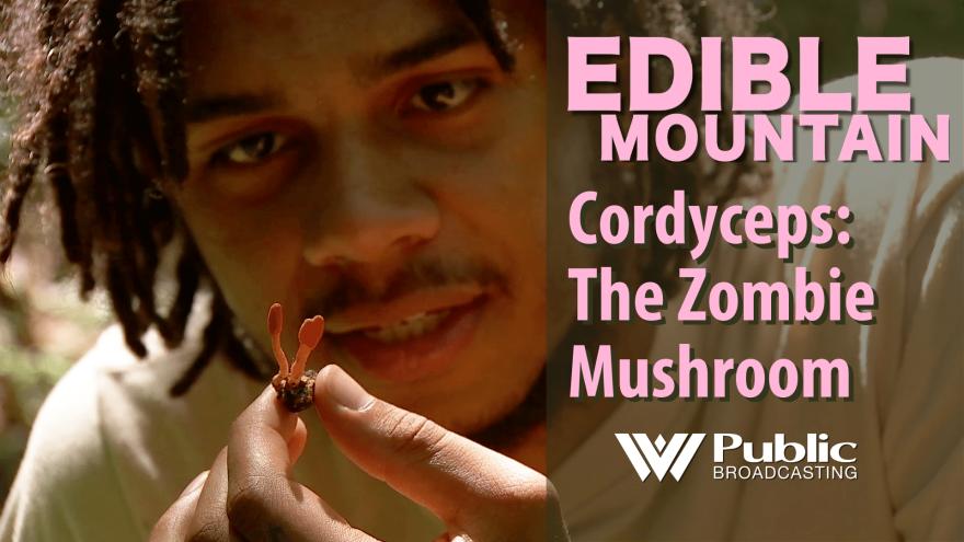 edible_mountain_-_cordyceps.png