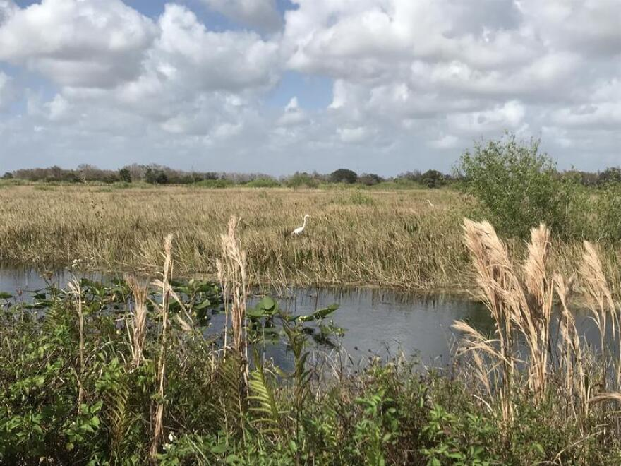 Loxahatchee National Wildlife Refuge, west of Boynton Beach, is home to wading birds including egrets, herons and wood storks.