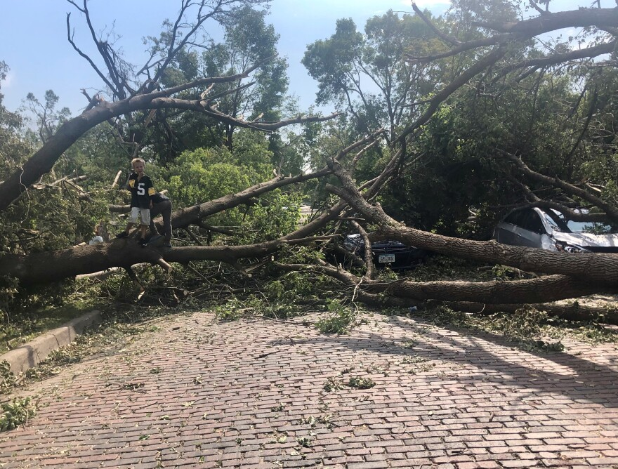 There are downed trees everywhere after Monday's storm.