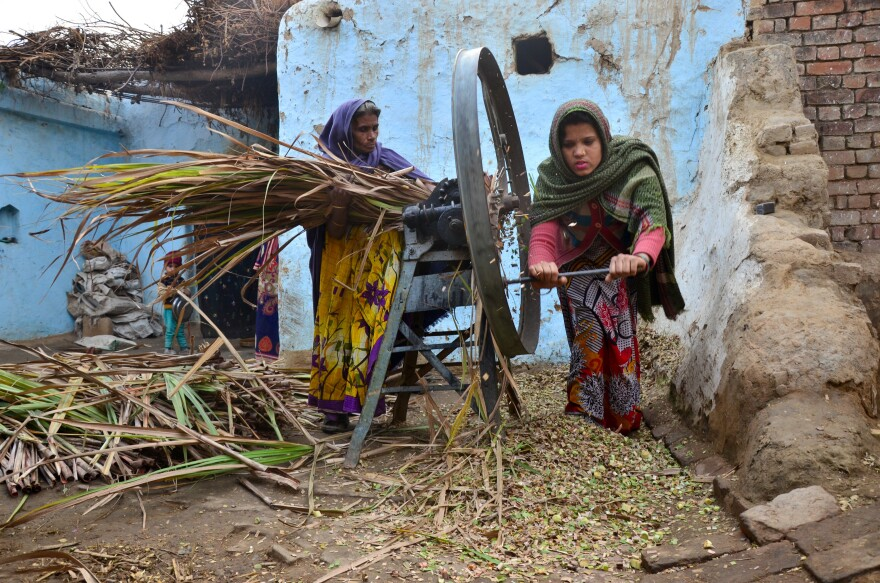 Without horsepower, they rely on human power: Mother and daughter-in-law Sheela and Sunita Devi shred sugarcane into feed.