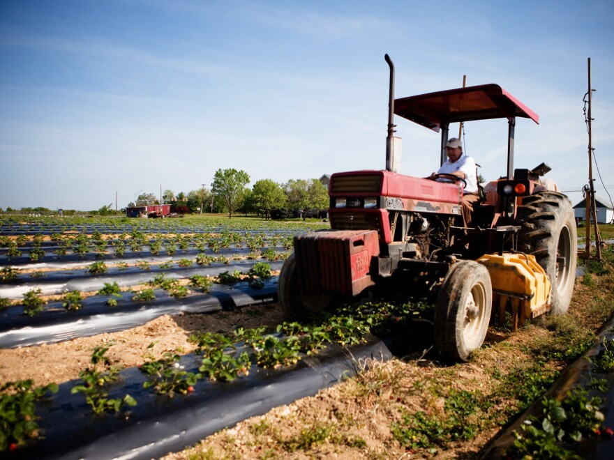 Miller Farms in Maryland is a family-run operation that sells its home-grown vegetables at farmers' markets and local grocery stores. Phil Miller, whose family owns the farm, says he's trying to earn a food safety certification now required by many food buyers.