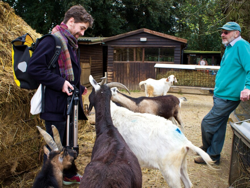 """Thwaites did goat research at Buttercups, which he says is """"the United Kingdom's (if not the world's) only sanctuary for abused goats."""" Its 250 goats live down the road from Thwaites's home."""