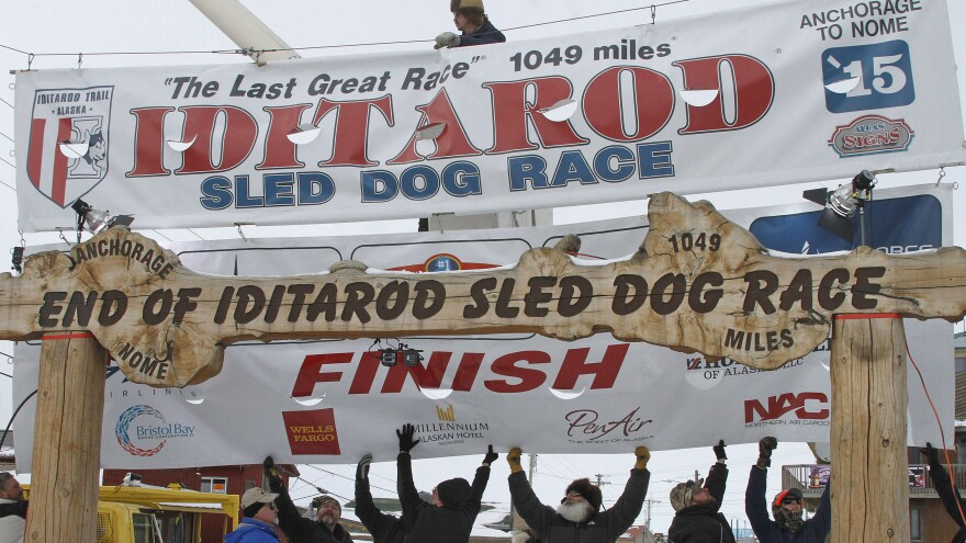 Volunteers help raise the Iditarod finishers banner at the burled arch finish line on Monday. Dallas Seavey won the race Wednesday morning.