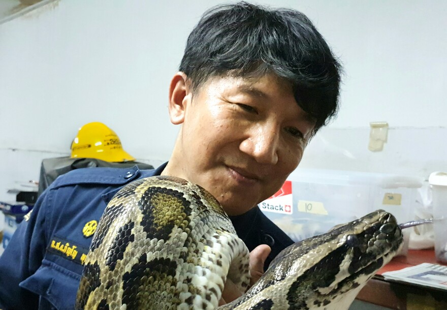 """Firefighter Pinyo Pukpinyo holds a Burmese python. In 16 years of snake wrangling, he says he has been bitten more than 20 times but helping people desperate to get rid of snakes in their homes """"makes me happy."""""""