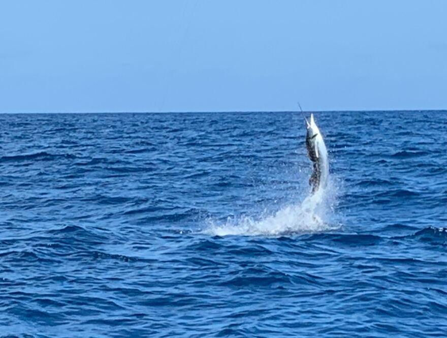 sailfish.jpg