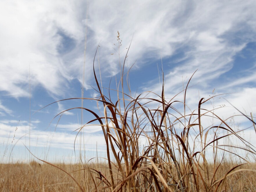 <p>Mixed grasses growing in a parcel of land enrolled in the Conservation Reserve Program is seen near Tribune, Kan. Millions of acres of CRP nationwide will be returned to farmland.</p>