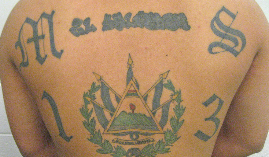 MS-13 back tattoo.png
