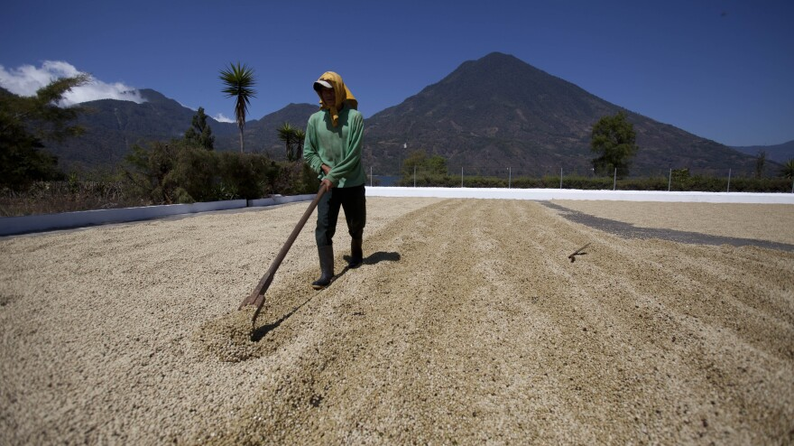 A worker dries coffee beans at a coffee plantation in Santiago Atitlan, Guatemala, in February 2013.