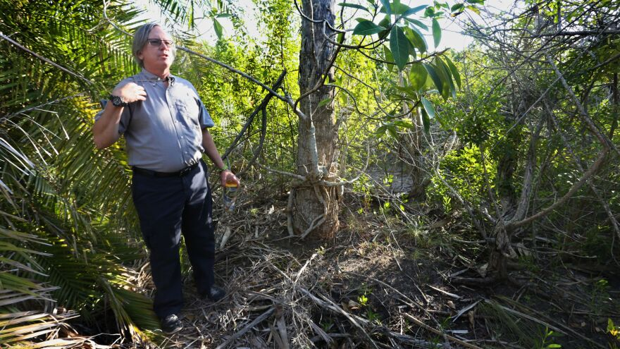 Gary Raulerson, an ecologist with the Tampa Bay Estuary Program, shows an upland area in Fort De Soto Park.