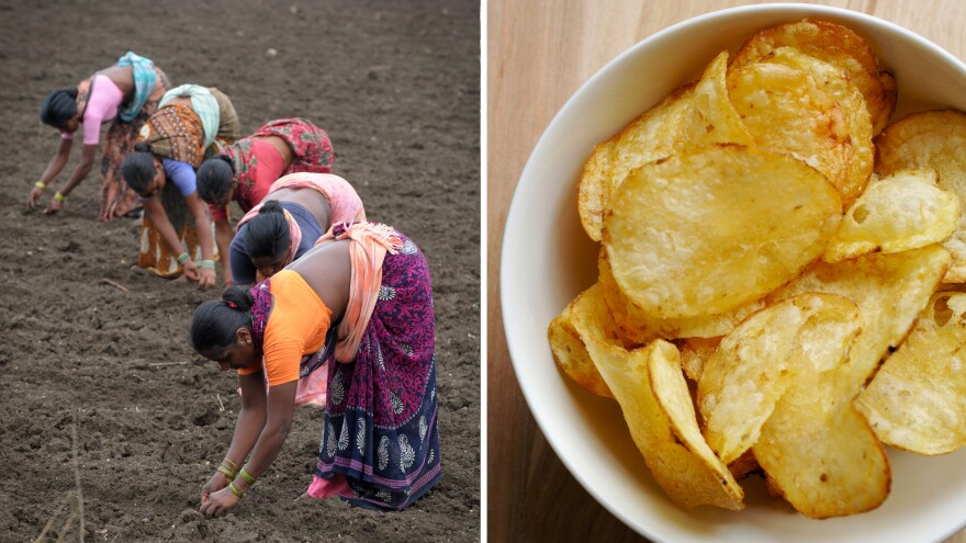 At left, laborers sow cotton seeds in a field ahead of anticipated monsoon rains in Warangal, India. At right, potato chips are often made with cottonseed oil.
