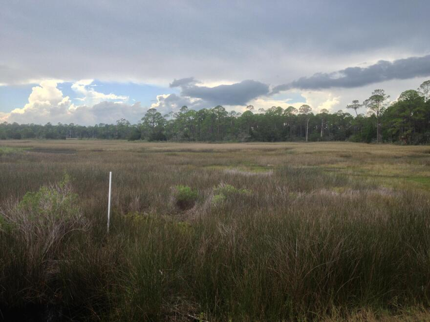 Pictured is a wetland area
