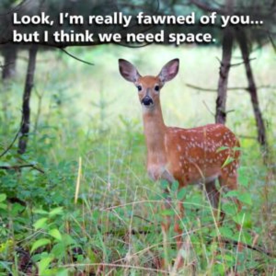 fawned_space-300x300.jpg