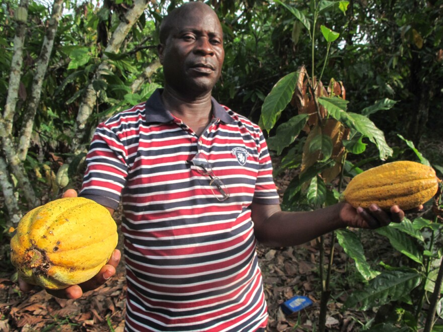 Farmer Georges Kouamé Koffi holding two cocoa pods. Chocolate is made from the almond-sized cocoa beans contained in the pods.