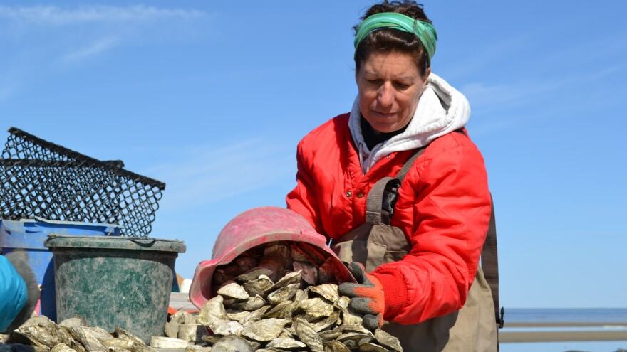 Oyster farmer and scientist Lisa Calvo leads a team of women that harvests oysters along the New Jersey coast. Calvo says she is inspired by the tenacity, skill and grit of women now coming into the industry.