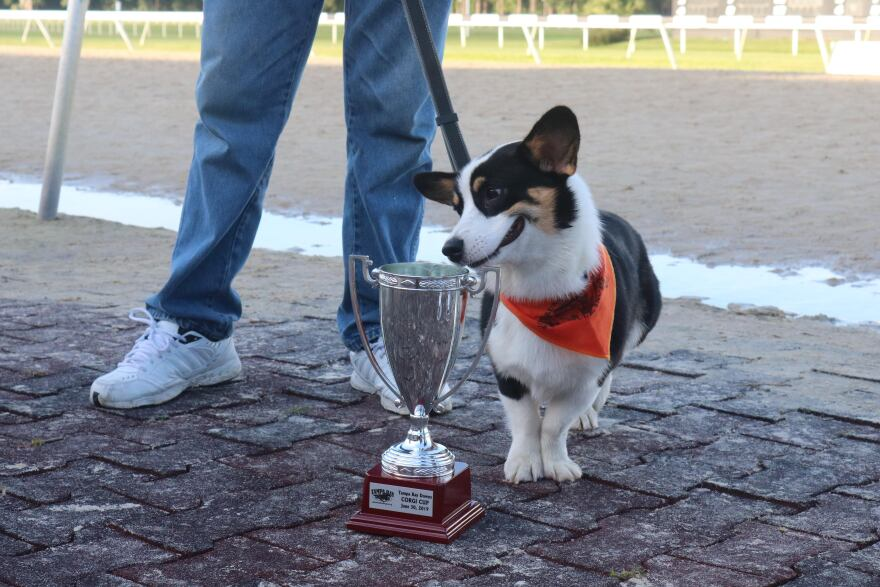 Corgis poses with trophy.