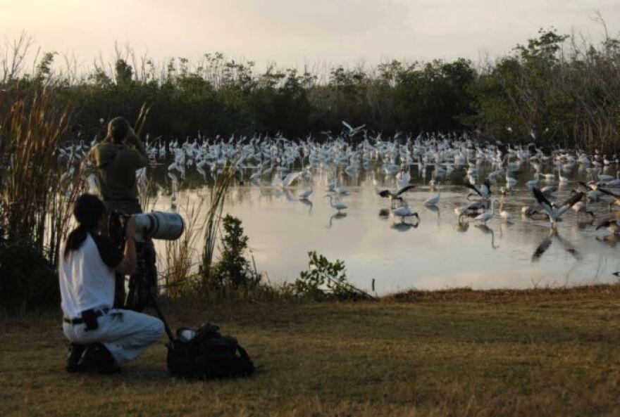 Birds gathered around a pond