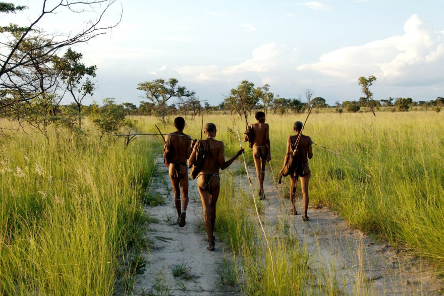 In Namibia today, members of the ancient tribe of hunter-gatherers still forage. New genetic research reveals they were once the largest group of humans.