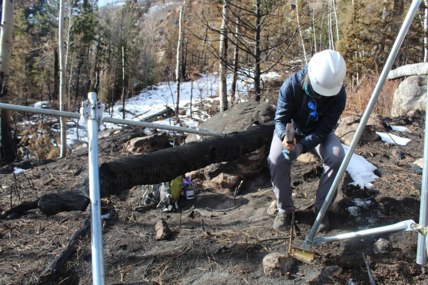 Colorado State University graduate student Megan Sears hammers a stake into burnt soil in the Cameron Peak burn scar, to stabilize a recently installed weather station.