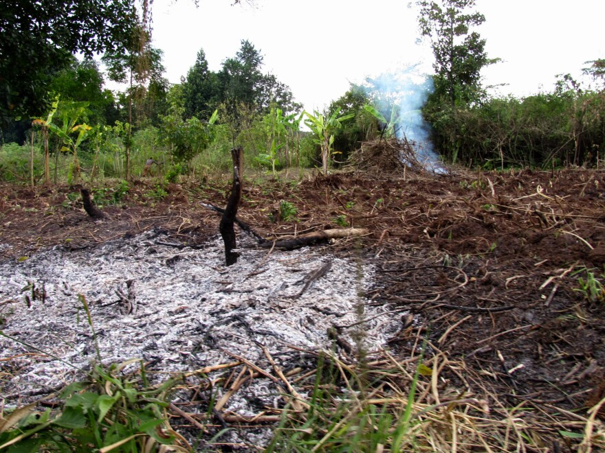This Ugandan land was cleared by burning so it could be used for growing crops.