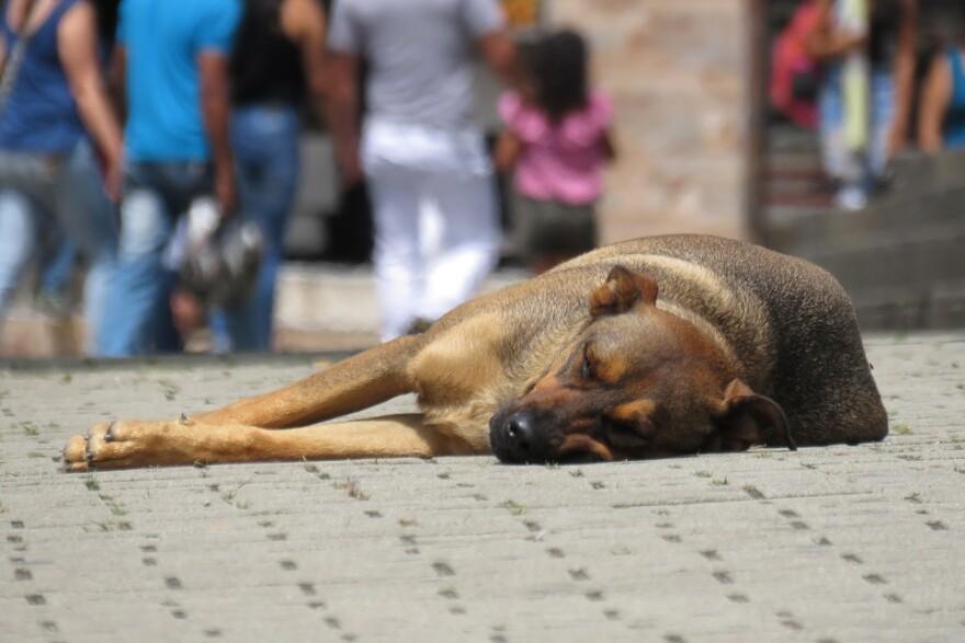street_dog.jpg