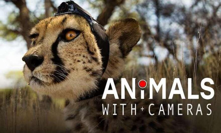 animals_with_cameras_graphic.jpg