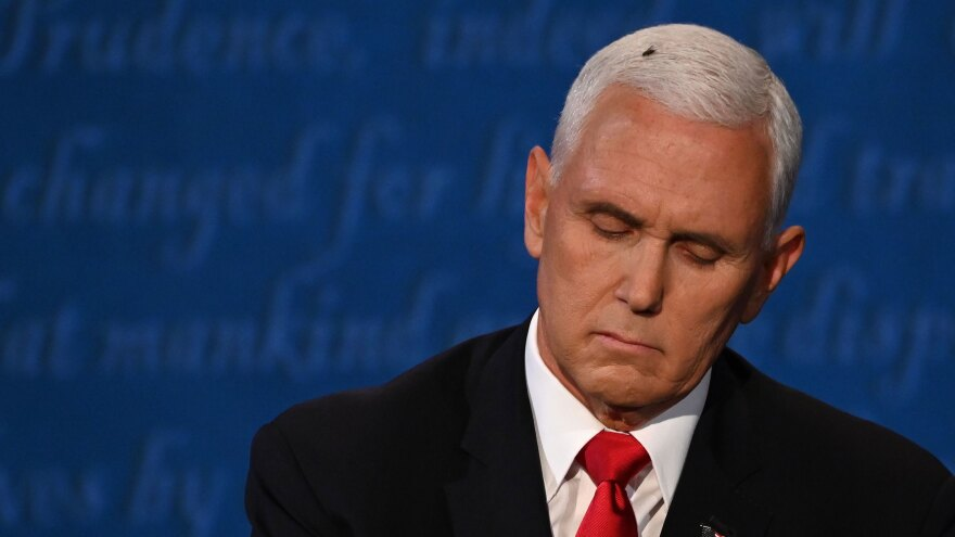 A fly lands on Vice President Mike Pence's head during the debate.