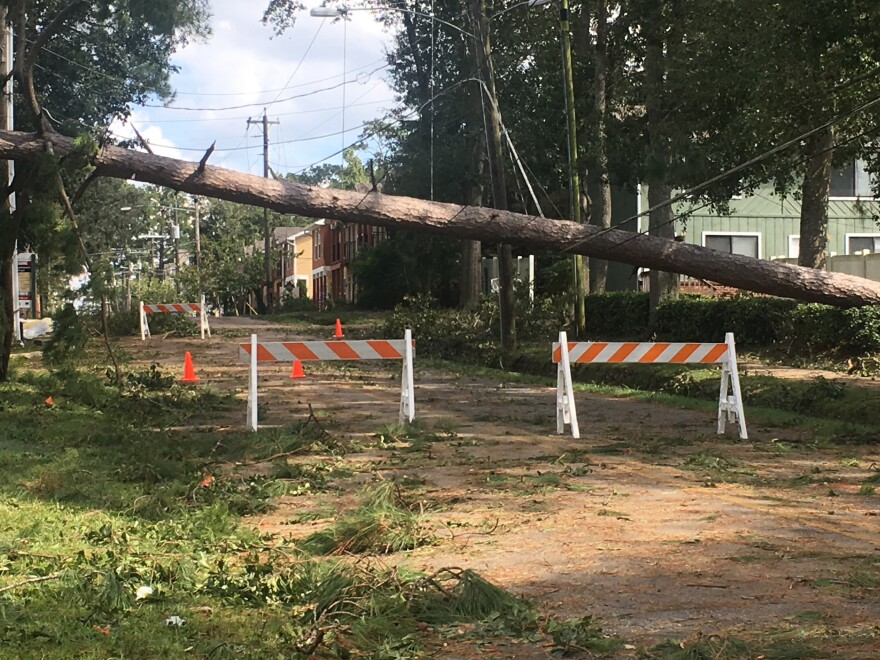 A tree knocked down a powerline during the storm