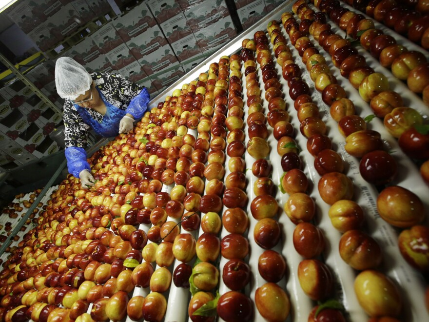 Nectarines are sorted at Eastern ProPak Farmers Cooperative in Glassboro, N.J.